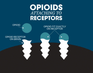 How Opioids Attach to Brain Receptors