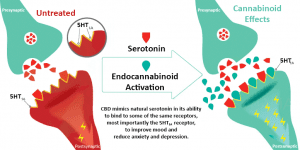 CBD and the serotonin system
