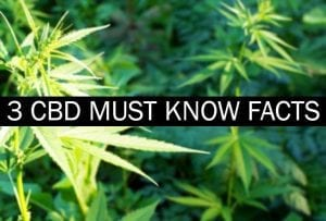 Hemp plants | 3 cbd must know facts