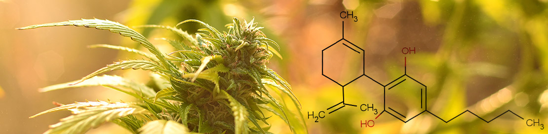 Everything to Know About CBD (Cannabidiol)