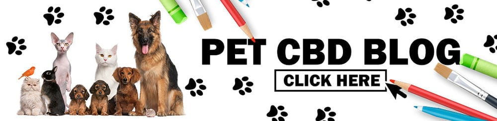 CBD for Pets Blog