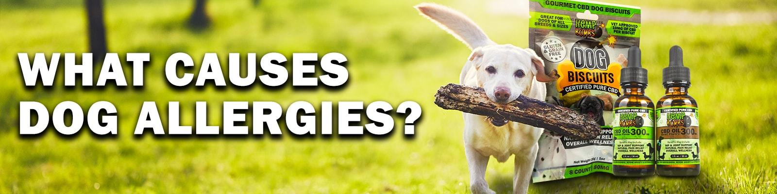 Hemp Bombs CBD For Dog Allergies