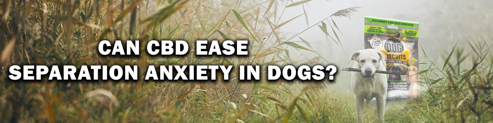 CBD Dog Treats for Separation Anxiety in Dogs