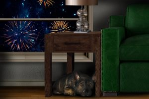 Pets and Fireworks Safety Fourth of July