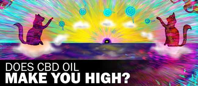Learn About CBD Oil: Will CBD Make Me High?