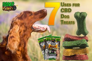 CBD Dog Treats for relaxation