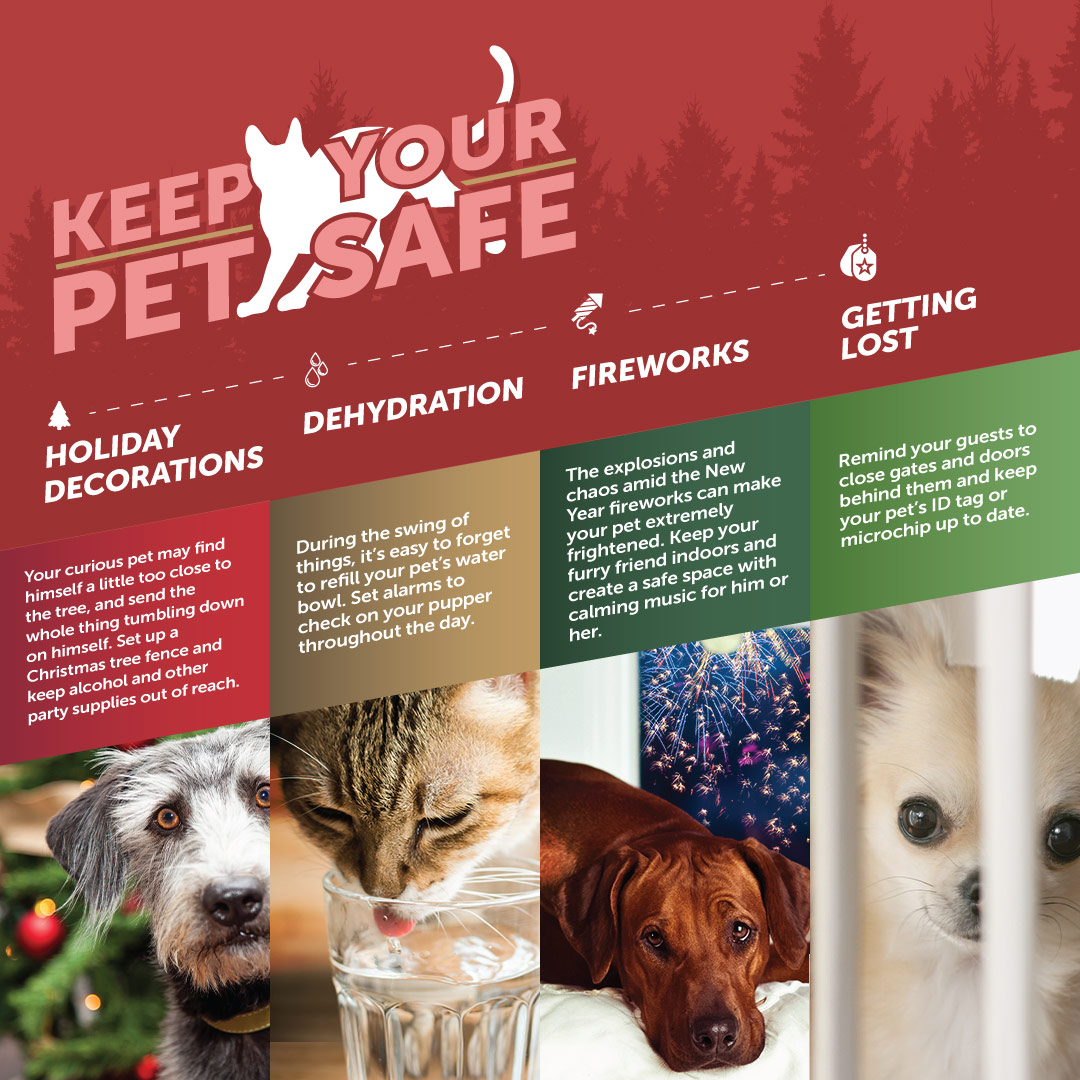 Keeping pets safe during the holiday with CBD