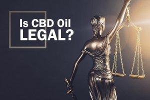 Hemp Bombs Legal CBD Oil