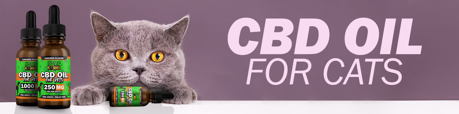 Guide on CBD Oil for Cats